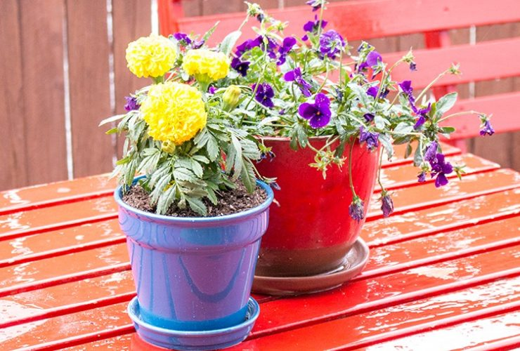 Perfect Potted Plants with Kunin Felt